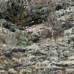 Mountain Country Range